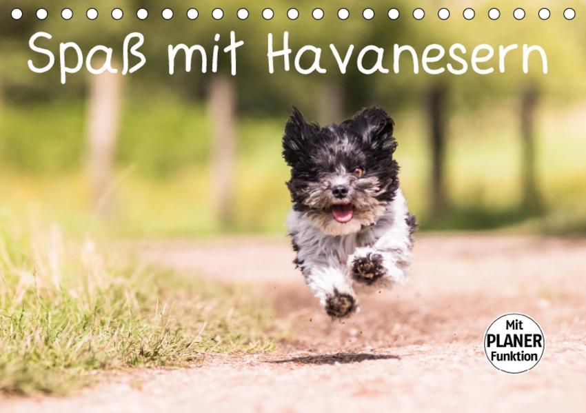 Spaß mit Havanesern (Tischkalender 2017 DIN A5 quer) - Coverbild