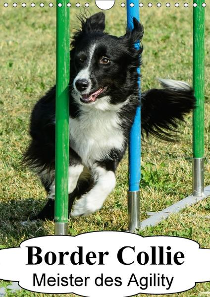 Border Collie Meister des Agility (Wandkalender 2017 DIN A4 hoch) - Coverbild