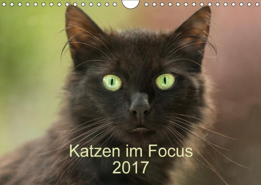 Katzen im Focus 2017 (Wandkalender 2017 DIN A4 quer) - Coverbild