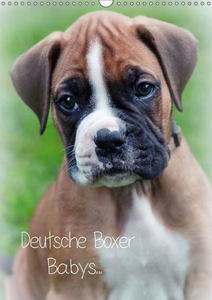 Deutsche Boxer Babys... (Wandkalender 2017 DIN A3 hoch) - Coverbild