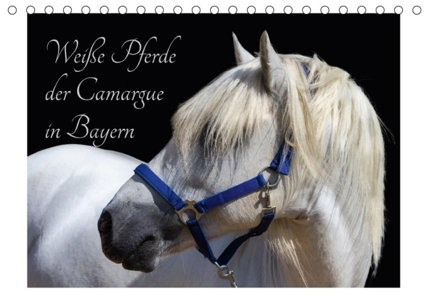 Weiße Pferde der Camargue in Bayern (Tischkalender 2017 DIN A5 quer) - Coverbild