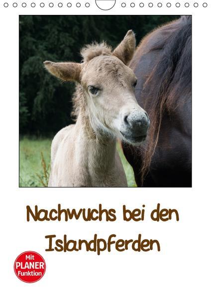 Nachwuchs bei den Islandpferden - Planer (Wandkalender 2017 DIN A4 hoch) - Coverbild