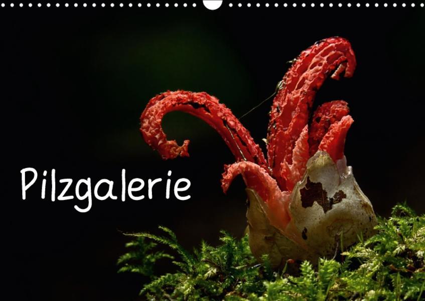 Pilzgalerie (Wandkalender 2017 DIN A3 quer) - Coverbild