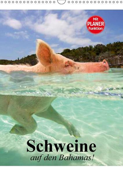 Schweine auf den Bahamas! (Wandkalender 2017 DIN A3 hoch) - Coverbild