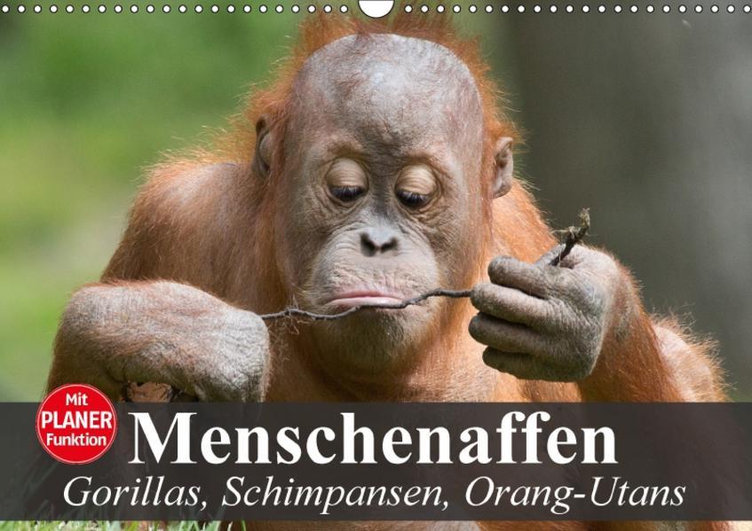 Menschenaffen. Gorillas, Schimpansen, Orang-Utans (Wandkalender 2017 DIN A3 quer) - Coverbild