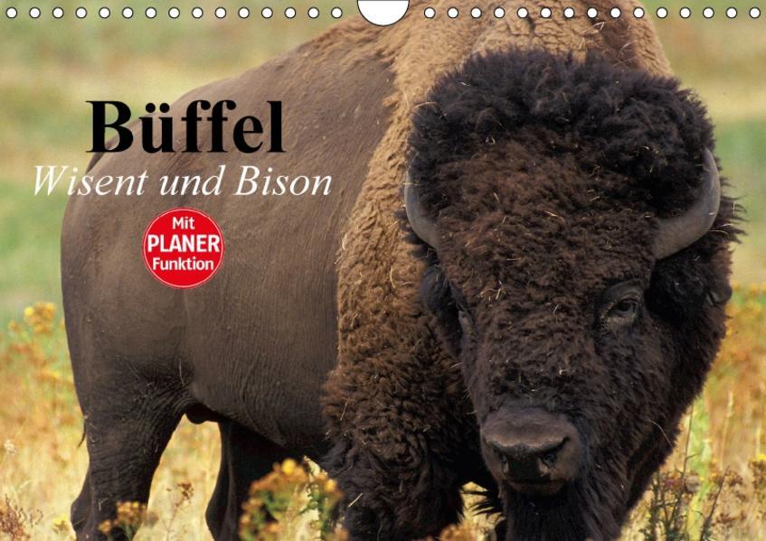 Büffel. Wisent und Bison (Wandkalender 2017 DIN A4 quer) - Coverbild