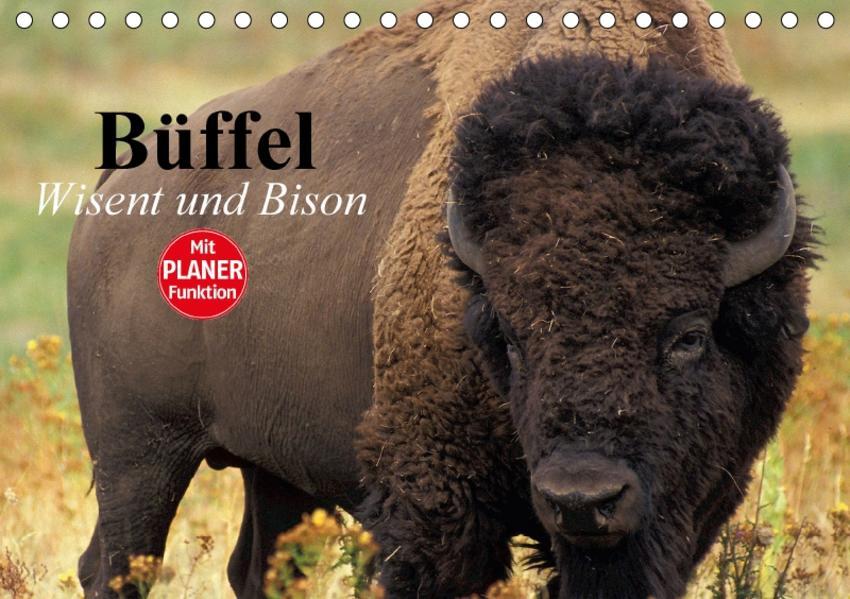 Büffel. Wisent und Bison (Tischkalender 2017 DIN A5 quer) - Coverbild