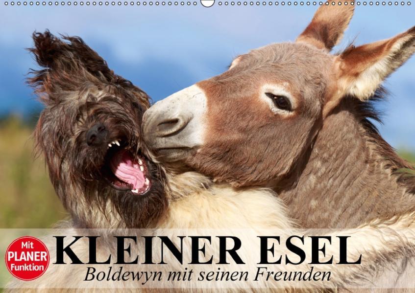 Kleiner Esel. Boldewyn mit seinen Freunden (Wandkalender 2017 DIN A2 quer) - Coverbild