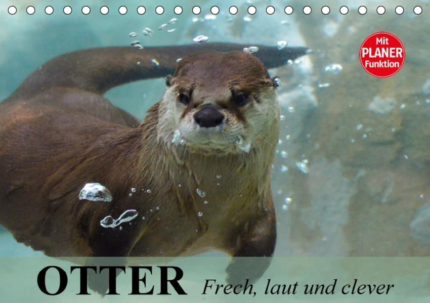 Otter. Frech, laut und clever (Tischkalender 2017 DIN A5 quer) - Coverbild