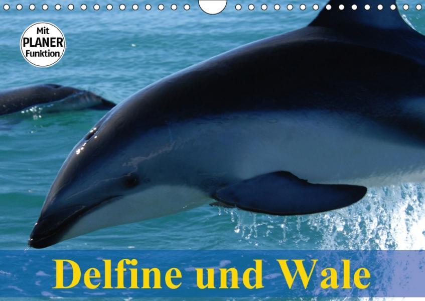Delfine und Wale (Wandkalender 2017 DIN A4 quer) - Coverbild