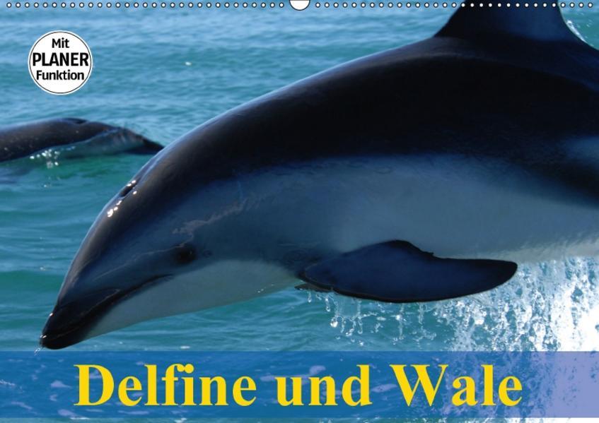 Delfine und Wale (Wandkalender 2017 DIN A2 quer) - Coverbild