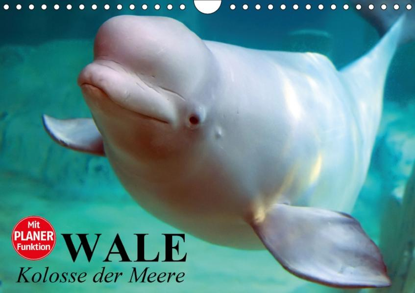 Wale. Kolosse der Meere (Wandkalender 2017 DIN A4 quer) - Coverbild