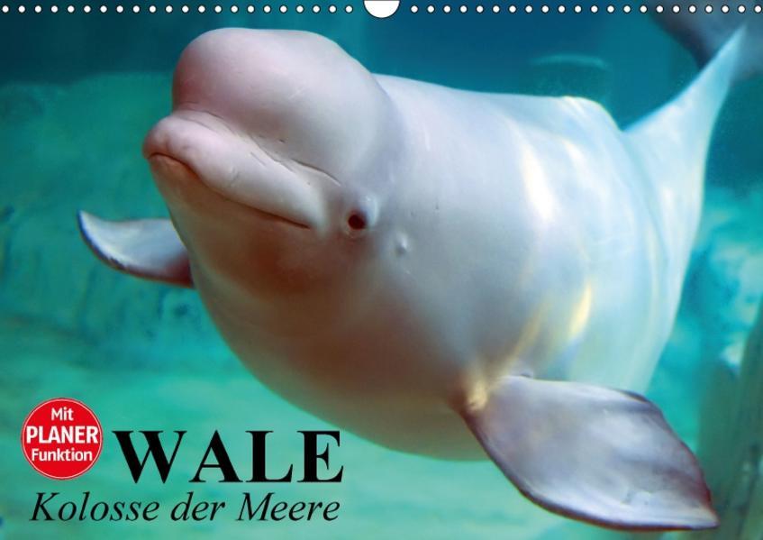 Wale. Kolosse der Meere (Wandkalender 2017 DIN A3 quer) - Coverbild