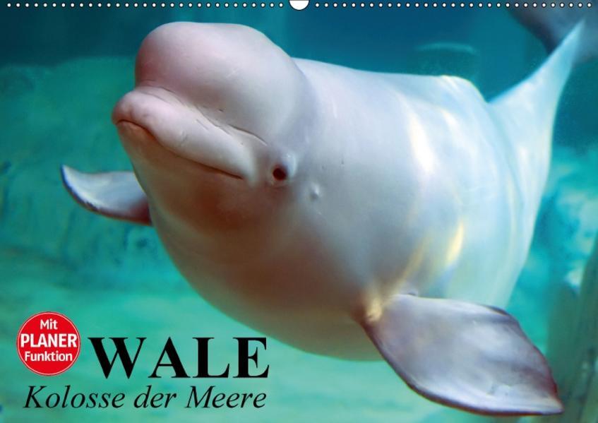 Wale. Kolosse der Meere (Wandkalender 2017 DIN A2 quer) - Coverbild