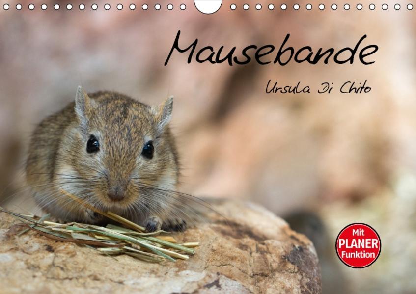 Mausebande (Wandkalender 2017 DIN A4 quer) - Coverbild