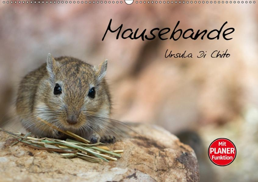 Mausebande (Wandkalender 2017 DIN A2 quer) - Coverbild