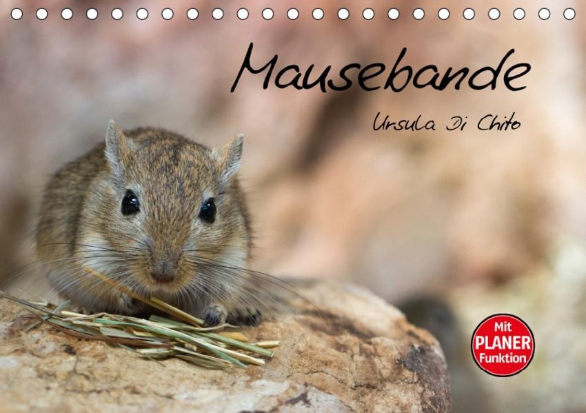 Mausebande (Tischkalender 2017 DIN A5 quer) - Coverbild