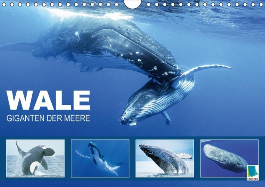 Wale: Giganten der Meere (Wandkalender 2017 DIN A4 quer) - Coverbild