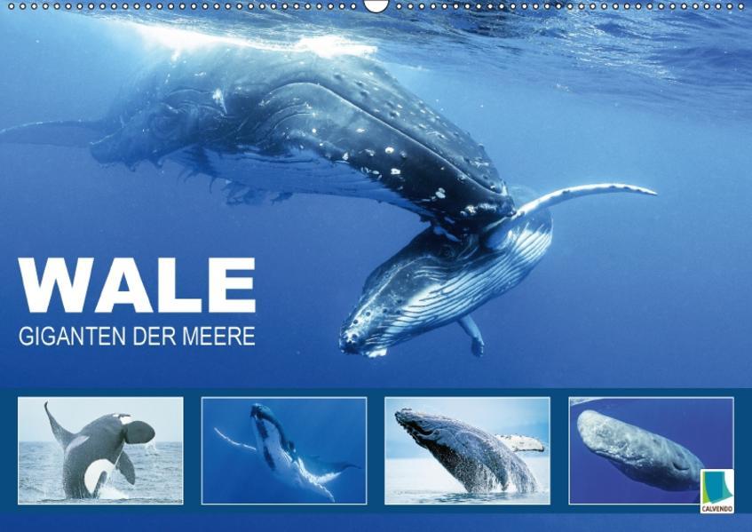 Wale: Giganten der Meere (Wandkalender 2017 DIN A2 quer) - Coverbild