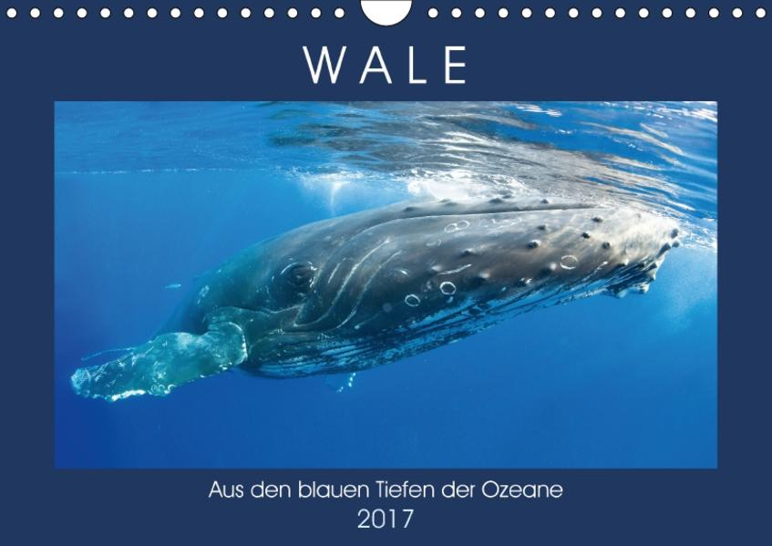 Wale: Aus den blauen Tiefen der Ozeane (Wandkalender 2017 DIN A4 quer) - Coverbild