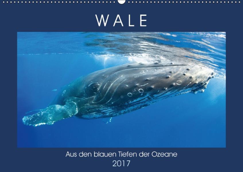 Wale: Aus den blauen Tiefen der Ozeane (Wandkalender 2017 DIN A2 quer) - Coverbild
