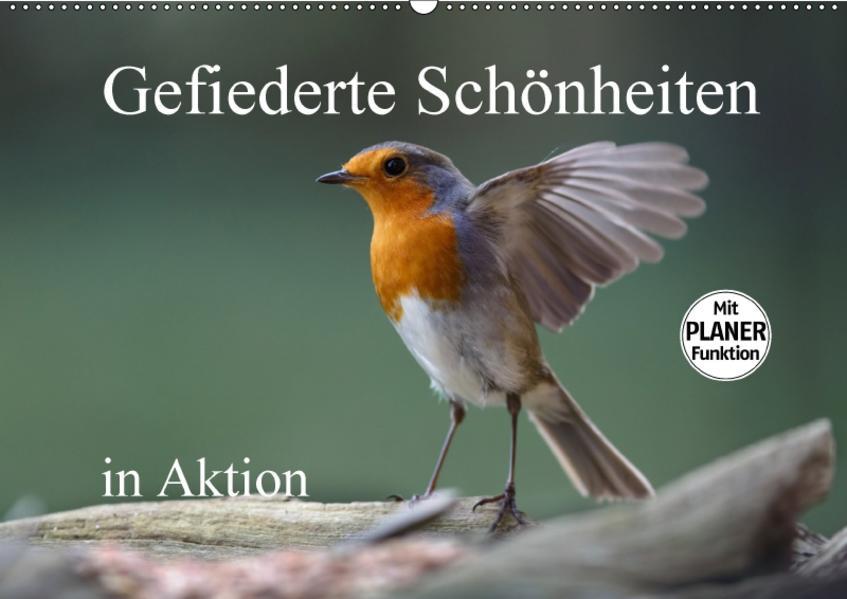Gefiederte Schönheiten in Aktion (Wandkalender 2017 DIN A2 quer) - Coverbild