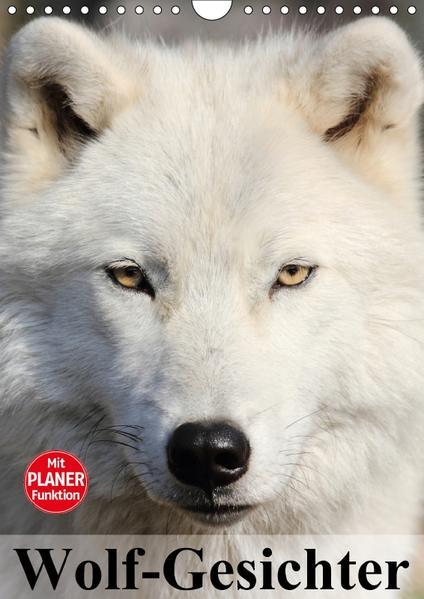 Wolf-Gesichter (Wandkalender 2017 DIN A4 hoch) - Coverbild