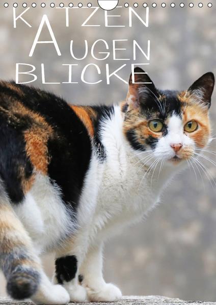 KATZEN AUGEN BLICKE (Wandkalender 2017 DIN A4 hoch) - Coverbild
