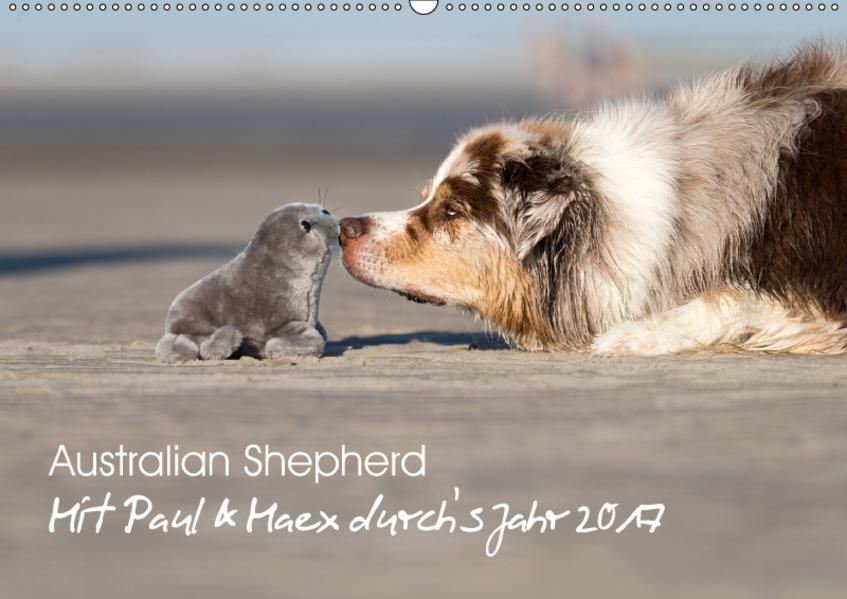 Australian Shepherd 2017 (Wandkalender 2017 DIN A2 quer) - Coverbild