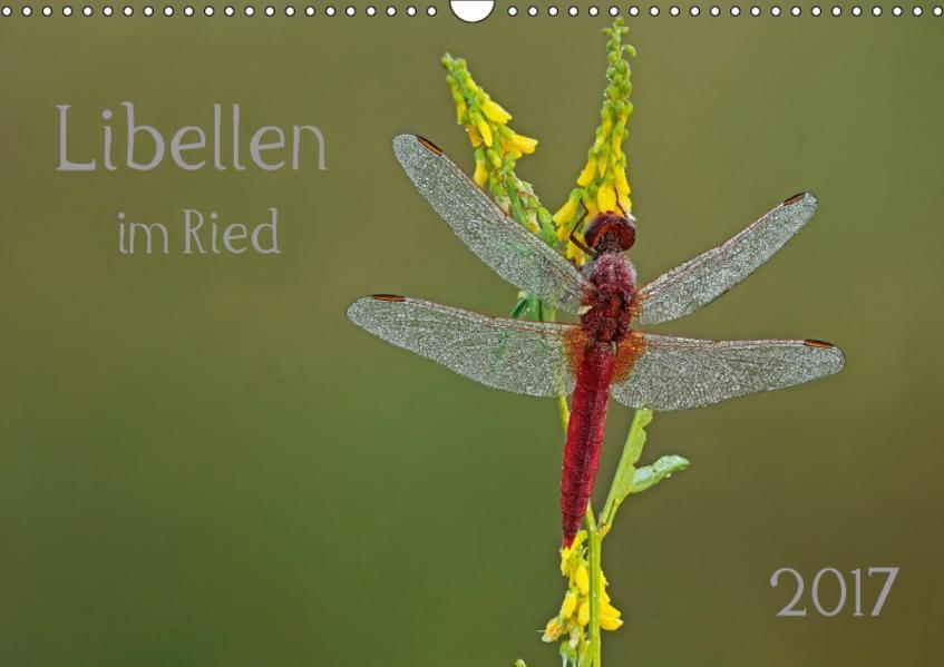 Libellen im Ried (Wandkalender 2017 DIN A3 quer) - Coverbild