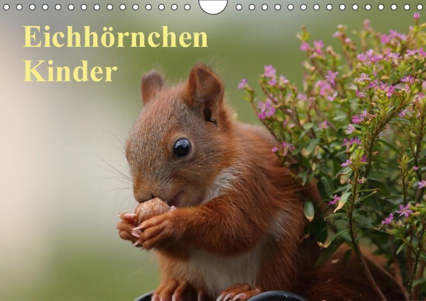 Eichhörnchen Kinder (Wandkalender 2017 DIN A4 quer) - Coverbild