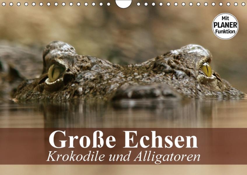 Große Echsen. Krokodile und Alligatoren (Wandkalender 2017 DIN A4 quer) - Coverbild