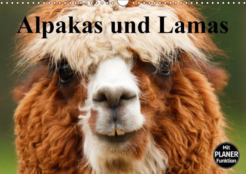 Alpakas und Lamas (Wandkalender 2017 DIN A3 quer) - Coverbild