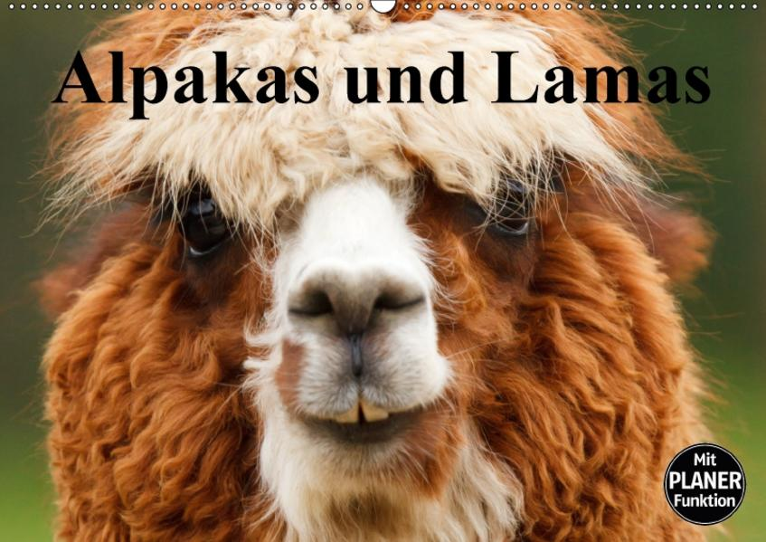 Alpakas und Lamas (Wandkalender 2017 DIN A2 quer) - Coverbild