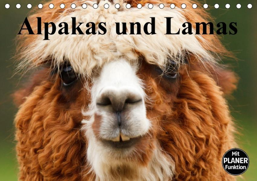 Alpakas und Lamas (Tischkalender 2017 DIN A5 quer) - Coverbild