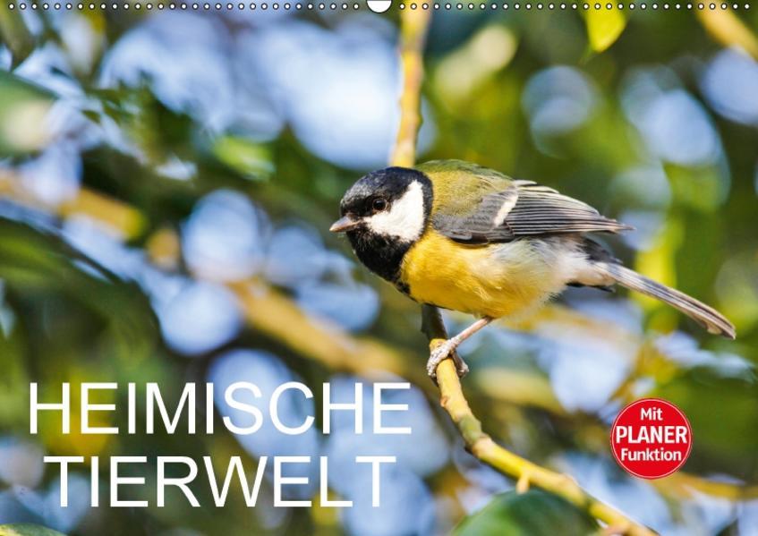 Heimische TierweltCH-Version  (Wandkalender 2017 DIN A2 quer) - Coverbild