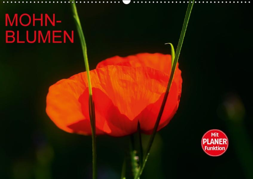 Mohnblumen (Wandkalender 2017 DIN A2 quer) - Coverbild