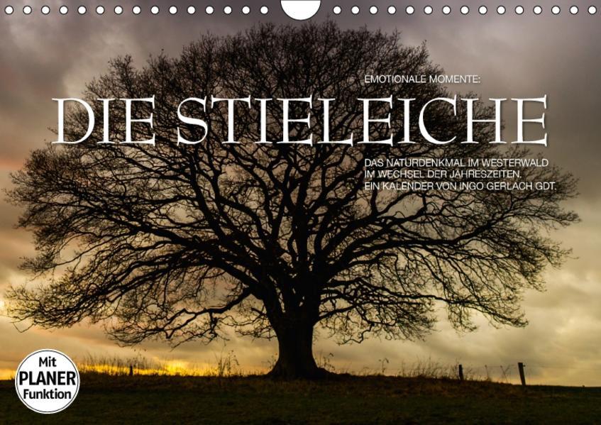 Emotionale Momente: Die Stieleiche (Wandkalender 2017 DIN A4 quer) - Coverbild