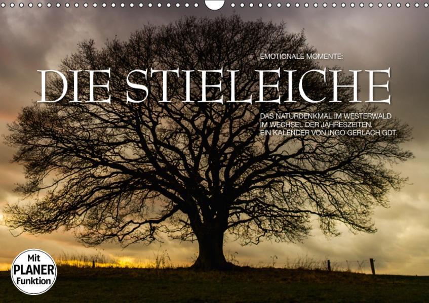 Emotionale Momente: Die Stieleiche (Wandkalender 2017 DIN A3 quer) - Coverbild