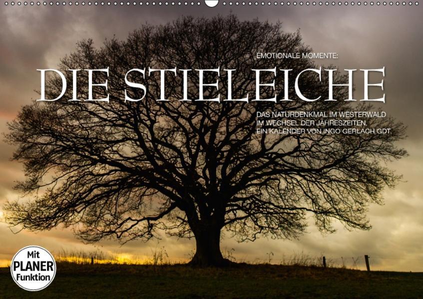 Emotionale Momente: Die Stieleiche (Wandkalender 2017 DIN A2 quer) - Coverbild