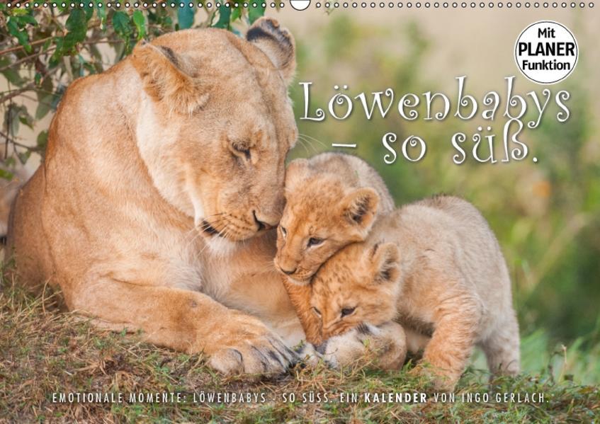 Emotionale Momente: Löwenbabys - so süß. (Wandkalender 2017 DIN A2 quer) - Coverbild