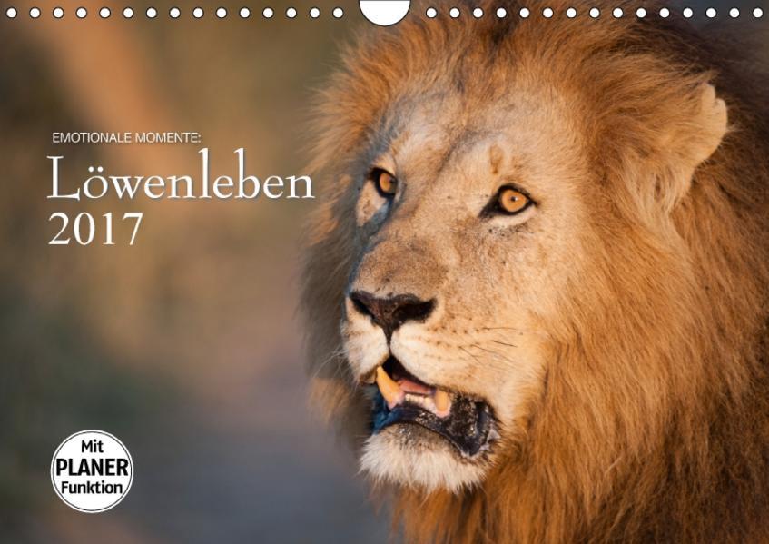 Emotionale Momente: Löwenleben (Wandkalender 2017 DIN A4 quer) - Coverbild