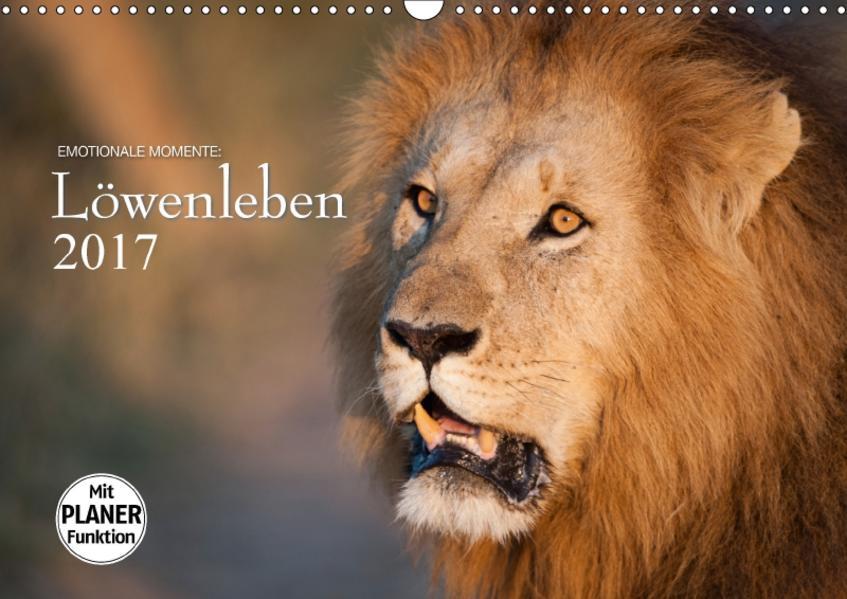 Emotionale Momente: Löwenleben (Wandkalender 2017 DIN A3 quer) - Coverbild