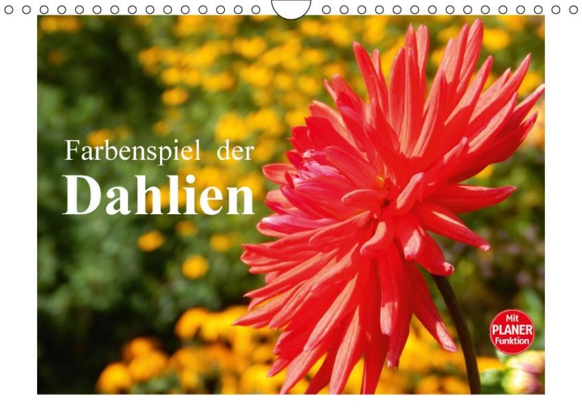 Farbenspiel der Dahlien (Wandkalender 2017 DIN A4 quer) - Coverbild