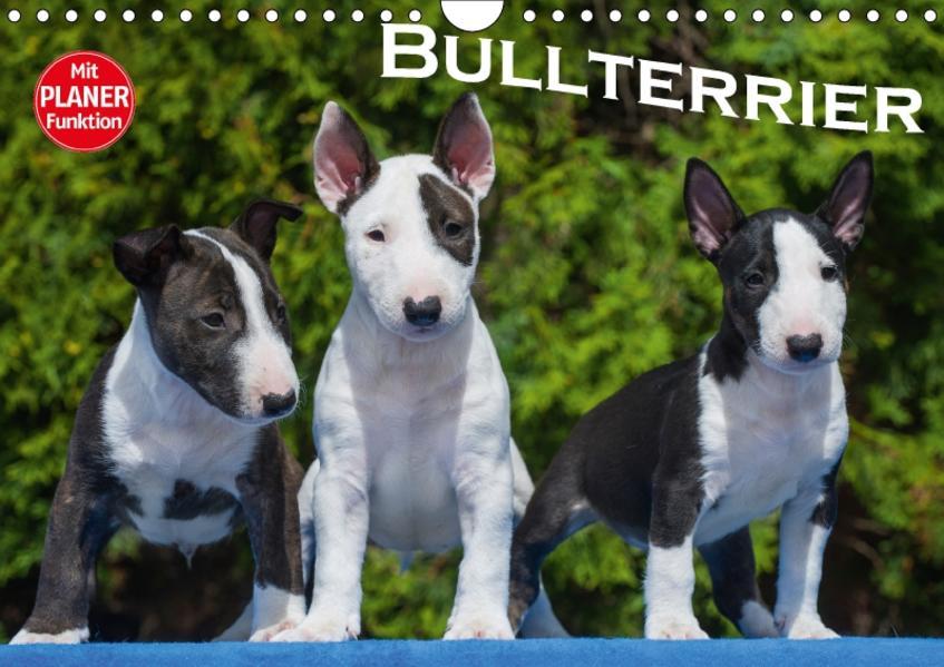 Bullterrier (Wandkalender 2017 DIN A4 quer) - Coverbild