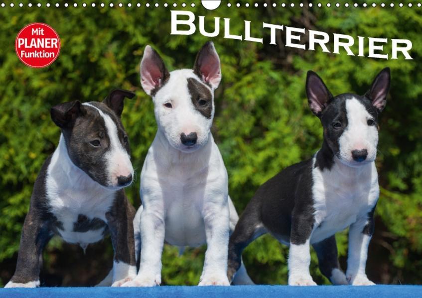 Bullterrier (Wandkalender 2017 DIN A3 quer) - Coverbild