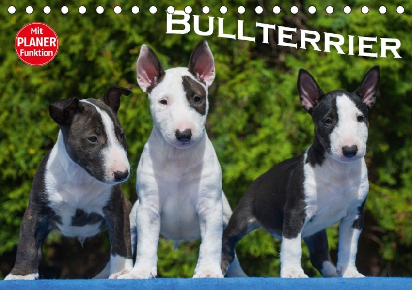 Bullterrier (Tischkalender 2017 DIN A5 quer) - Coverbild
