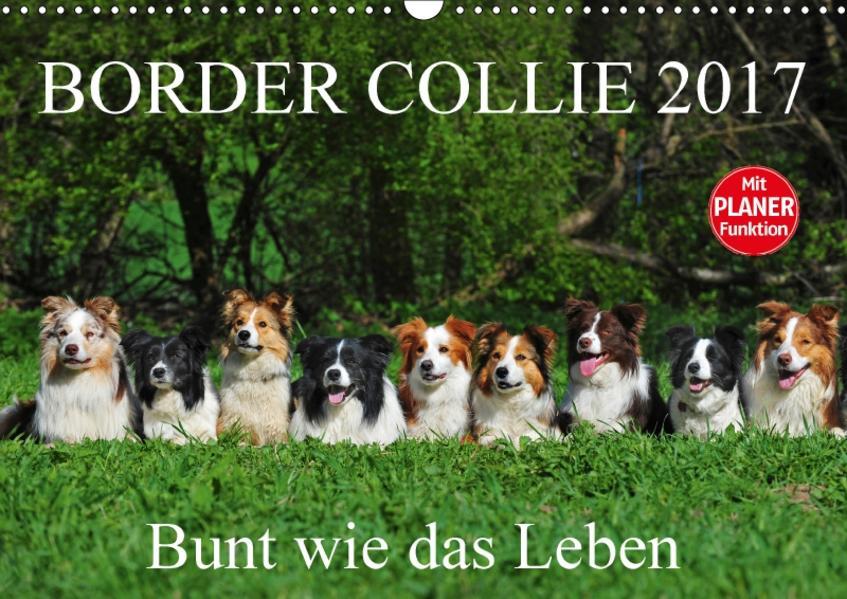 Border Collie 2017 (Wandkalender 2017 DIN A3 quer) - Coverbild