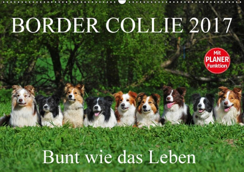 Border Collie 2017 (Wandkalender 2017 DIN A2 quer) - Coverbild