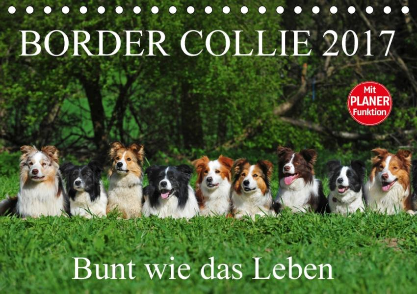 Border Collie 2017 (Tischkalender 2017 DIN A5 quer) - Coverbild